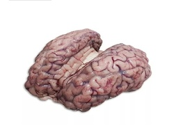 Brain With Membrane